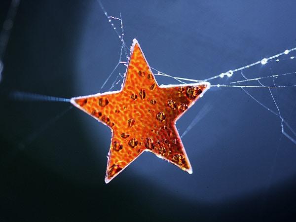 Atenție! Cad stele!
