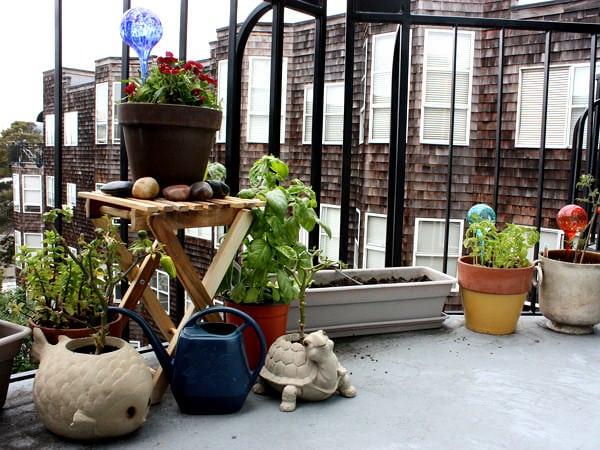 5 plante aromatice de crescut pe balcon