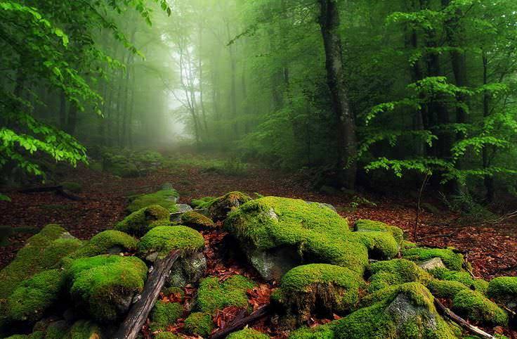Un an de pădure în trei minute