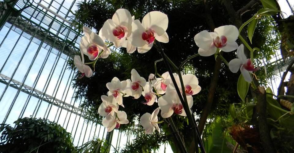Activitate de primăvara: plimbare la Grădina Botanică