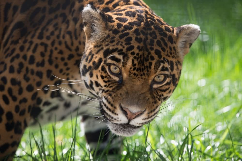 UPC si Zoo Baneasa sarbatoresc Ziua Internationala a Gradinilor Zoologice