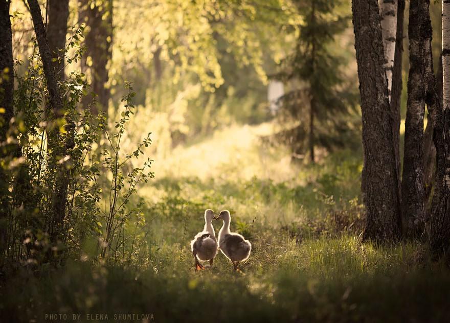 animal-children-photography-elena-shumilova-2-22