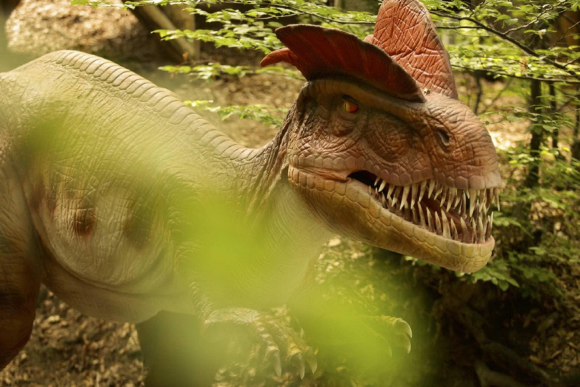 Noutăți la Dino Parc