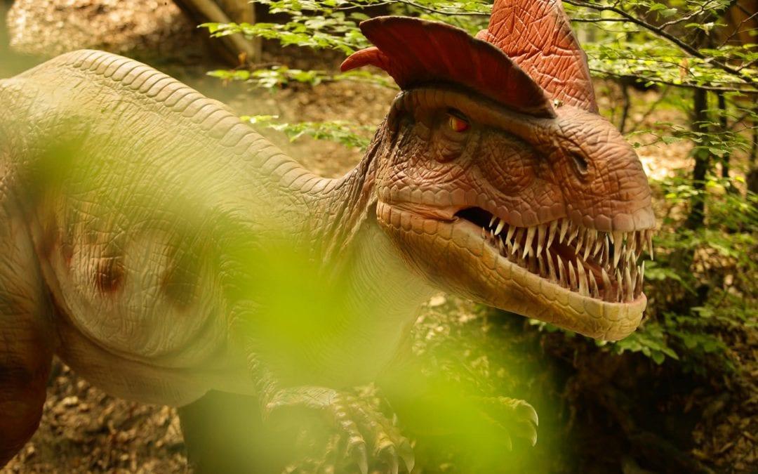 Despre dinozaurii de la Râșnov