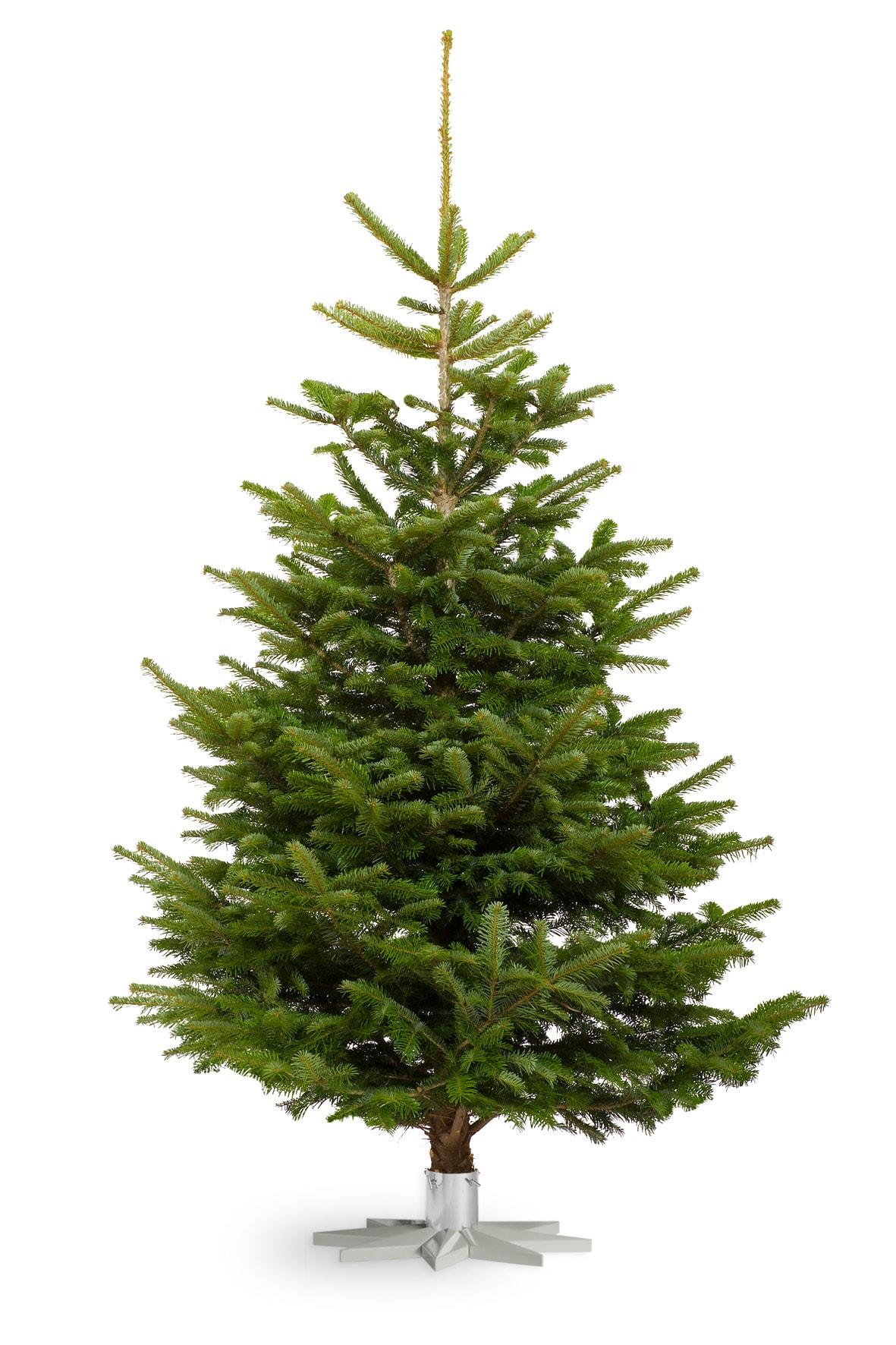 Brad de Crăciun natural
