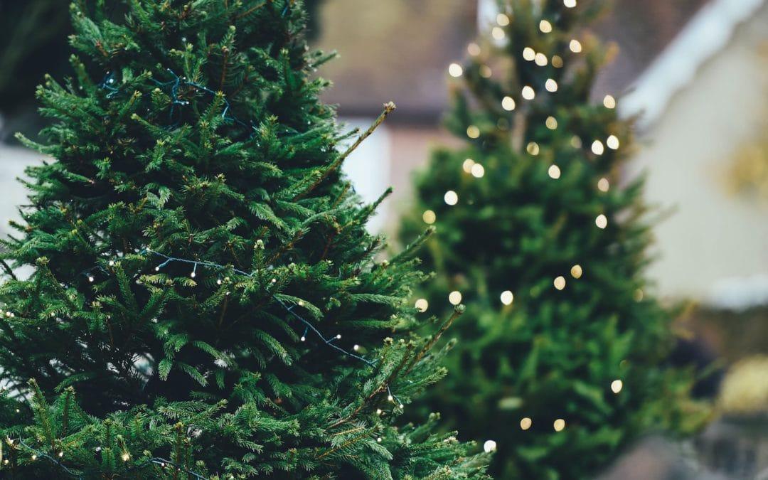 Bradul de Crăciun – natural sau artifical?