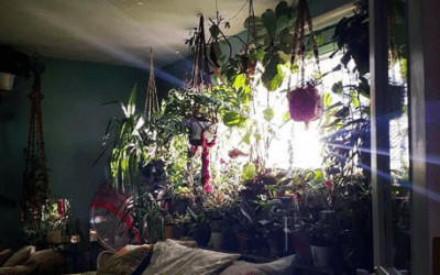 Ce nu știai despre plante – Episodul 1: pentru dormitorul tău
