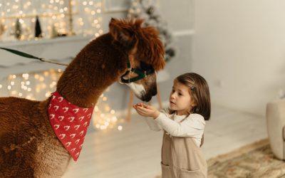 Terapie asistată cu Alpaca – prima fermă terapeutică din România